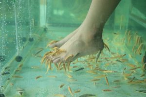 Feet Getting A Fish Pedicure